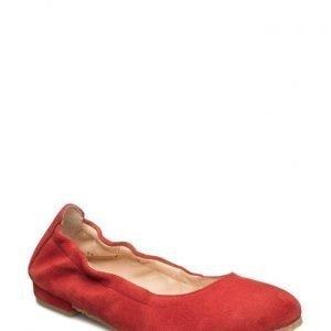 Angulus Ballerina